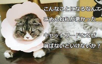 猫安心安全ご飯選び方