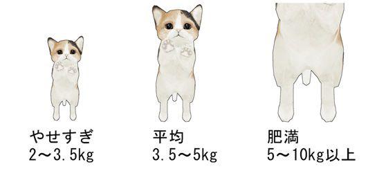 猫平均体重図