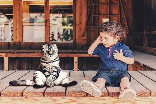 子供猫ペット家族