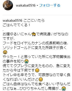 クプレラ猫評判口コミ体験談