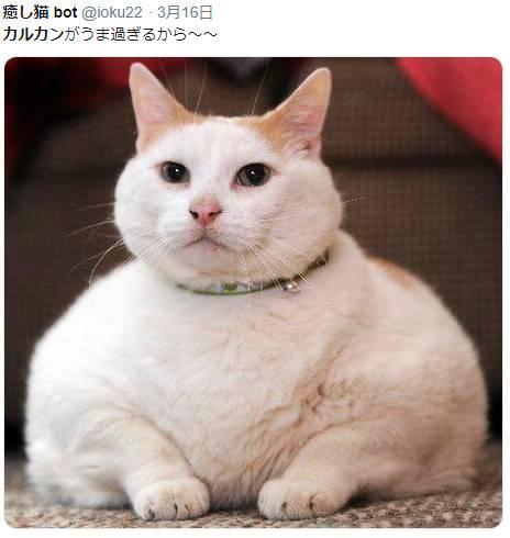 カルカン猫評判感想評価